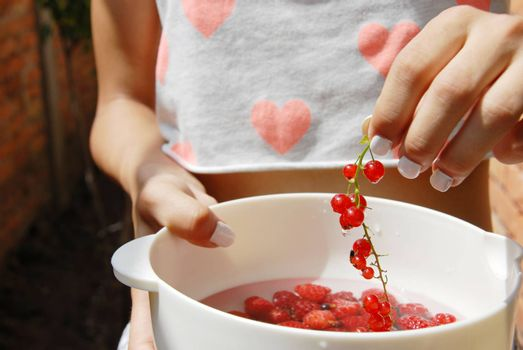 Hand holding red currants