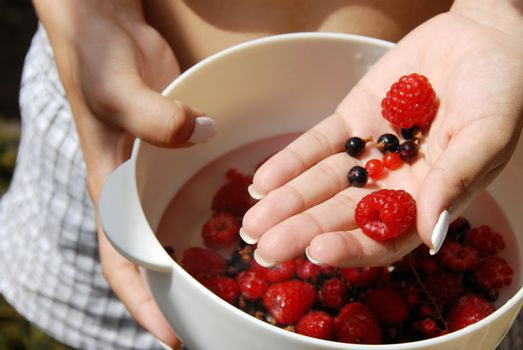 Holding red raspberries and currants in the hand