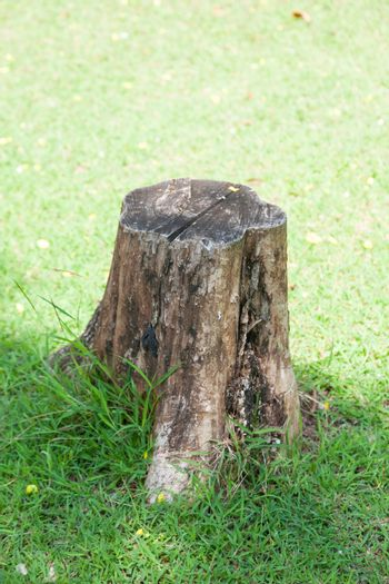 Stump on the lawn. The old tree stump and cut dry on the grass in the park.