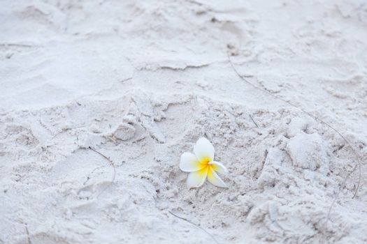 Flower on the sand White flower on the beach. Falling from a tree