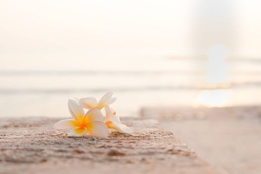 Flower on the floor White flower lay on the floor. Behind the sea