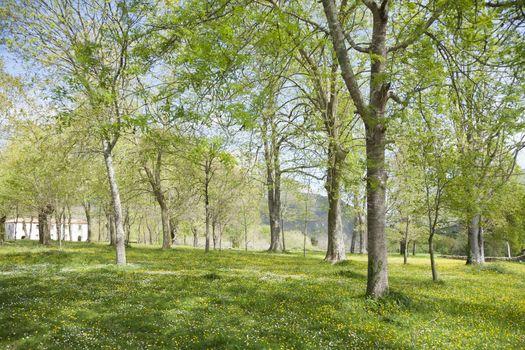 green landscape trees