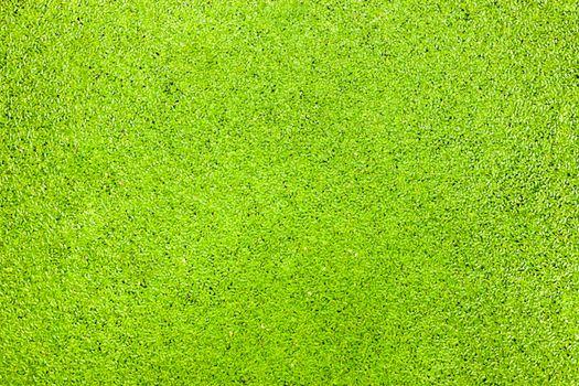 Green among aquatic plants texture background
