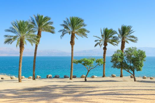 Scenery of Dead Sea with palm trees on sunshine coast