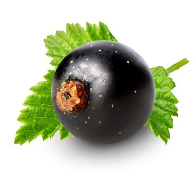 Berry of black currant