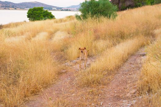 Brown dog in nature