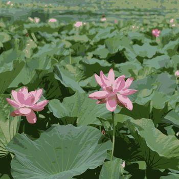 Lotus  pink flower on  pond in green leaf. Vector illustration.