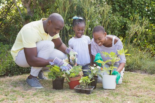 Happy smiling couple gardening with their daughter