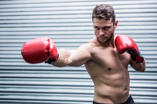 Concentrated muscular boxer