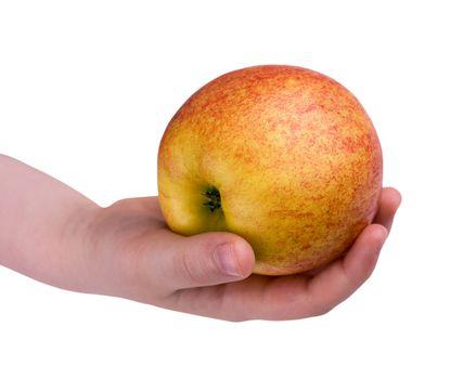 Apple on child palm