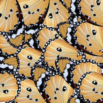 exotic color butterfly wing