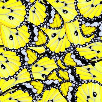 exotic yellow butterfly wing