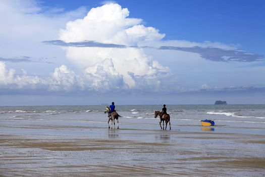 Kota Kinabalu, Malaysia - Jenuary 07, 2015: A horse galloping on the beach Borneo in Malaysia. The beaches, bounded by sand dunes and the sea skirt the coast of Borneo and extend unbroken for many miles, and with relatively few people the open spaces are ideal for vigourous horse riding.