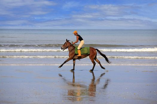 Kota Kinabalu, Malaysia - Jenuary 12, 2015: A horse galloping on the beach Borneo in Malaysia. The beaches, bounded by sand dunes and the sea skirt the coast of Borneo and extend unbroken for many miles, and with relatively few people the open spaces are ideal for vigourous horse riding.