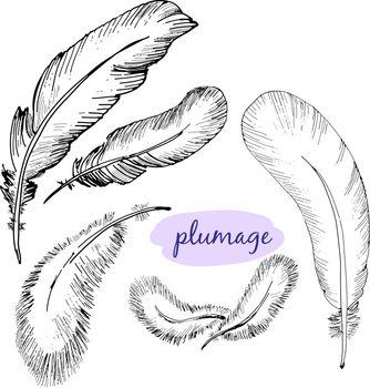 Vector set of sketch plumage