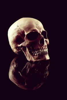 A Natural human skull on black background.