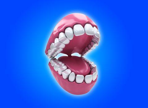 Permanent teeth, adult dentition