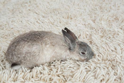 Rabbit sleeping on the floor