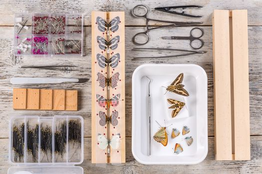 Butterflies and tools