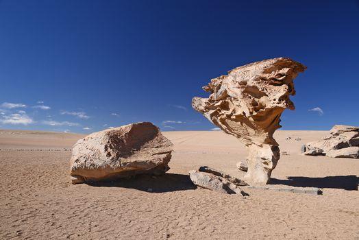tree rock in bolivia