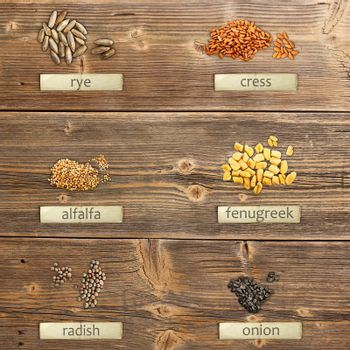 Different seeds