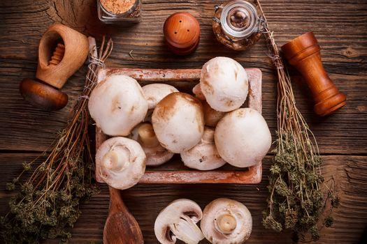 Fresh edible mushrooms