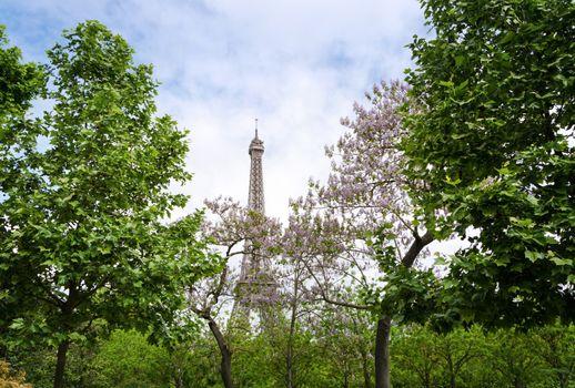 Eiffel Tower at Champ de Mars Garden in Paris