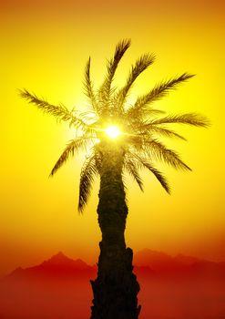 Palm in desert