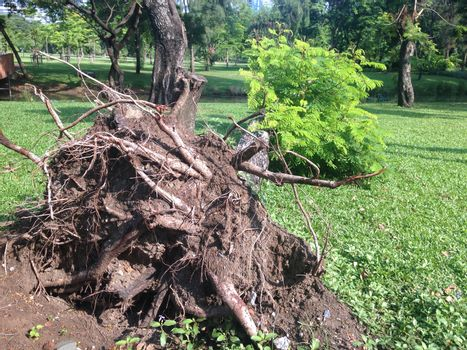 the tree is falling on a ground after storm