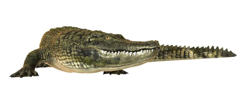 3D digital render of an American alligator isolated on white background