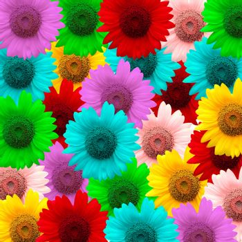 exotic color sunflower