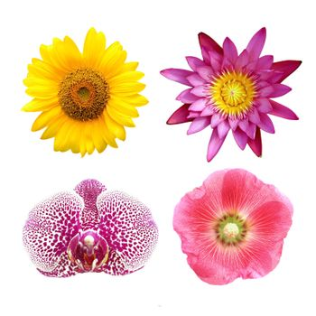 colorful floral collage lotus; orchid; sunflower; hollyhock