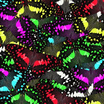 exotic butterfly as nature background