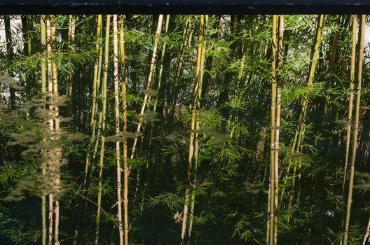 Reflection of bamboo garden