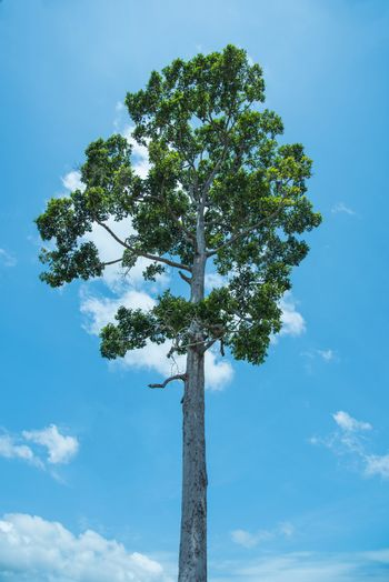view of blue sky and tree