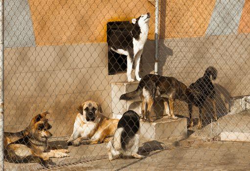shelter homeless dogs