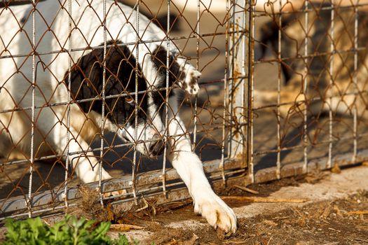 homeless old dog shelter