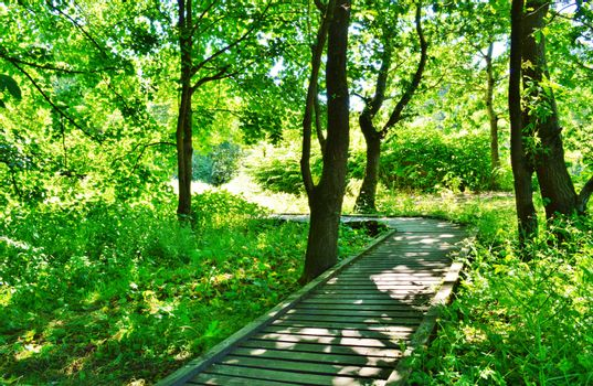 An image of a woodland nature trail.