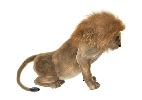 3D digital render of a male lion isolated on white background