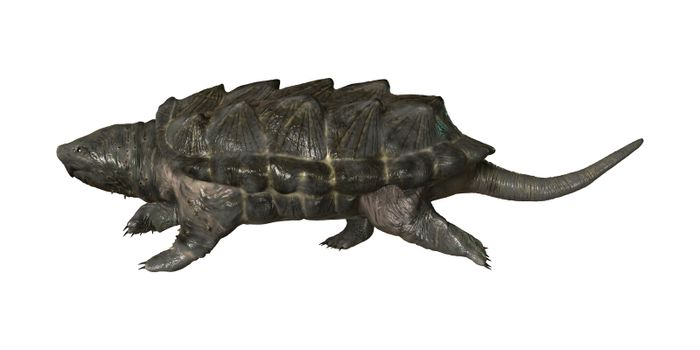 3D digital render of an alligator snapping turtle isolated on white background