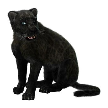 3D digital render of a big cat black panther isolated on white background