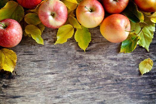 Fallen Apples Backdrop