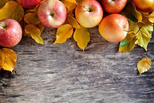 Autumn Apples Backdrop