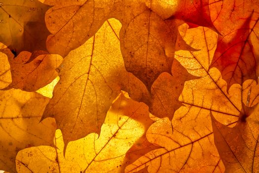 Bright autumn leaves, background
