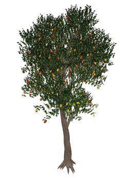 Pear tree - 3D render