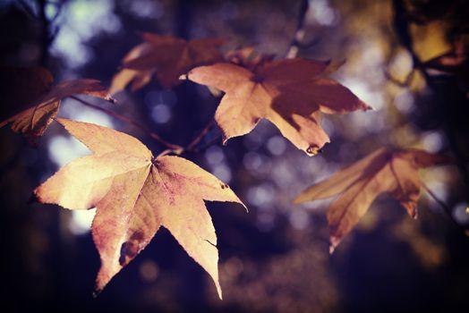 Fall season foliage leaf vintage background