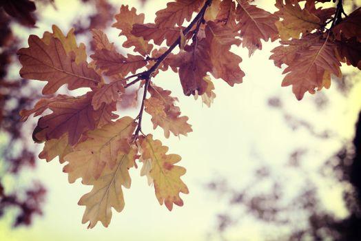 Fall season vintage tree leaf sun background