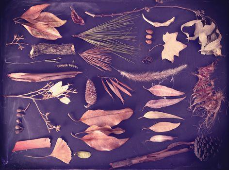 Fall elements autumn blackboard vintage background