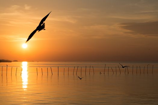 Every morning in winter season at Bangpu, Samutprakarn, Thailand, there are many seagulls fly over the sea which have a view is the sun. The sky is not quite clear due to slightly clouds but the sun still can make the golden color on it.