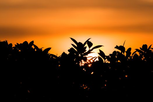 The small trees in silhouette view which in the sunrise background. The sunrise is in a warm colors are yellow and orange.